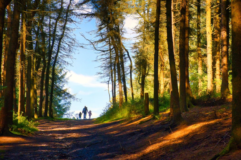 Leaving the Forest ©HelenBushe