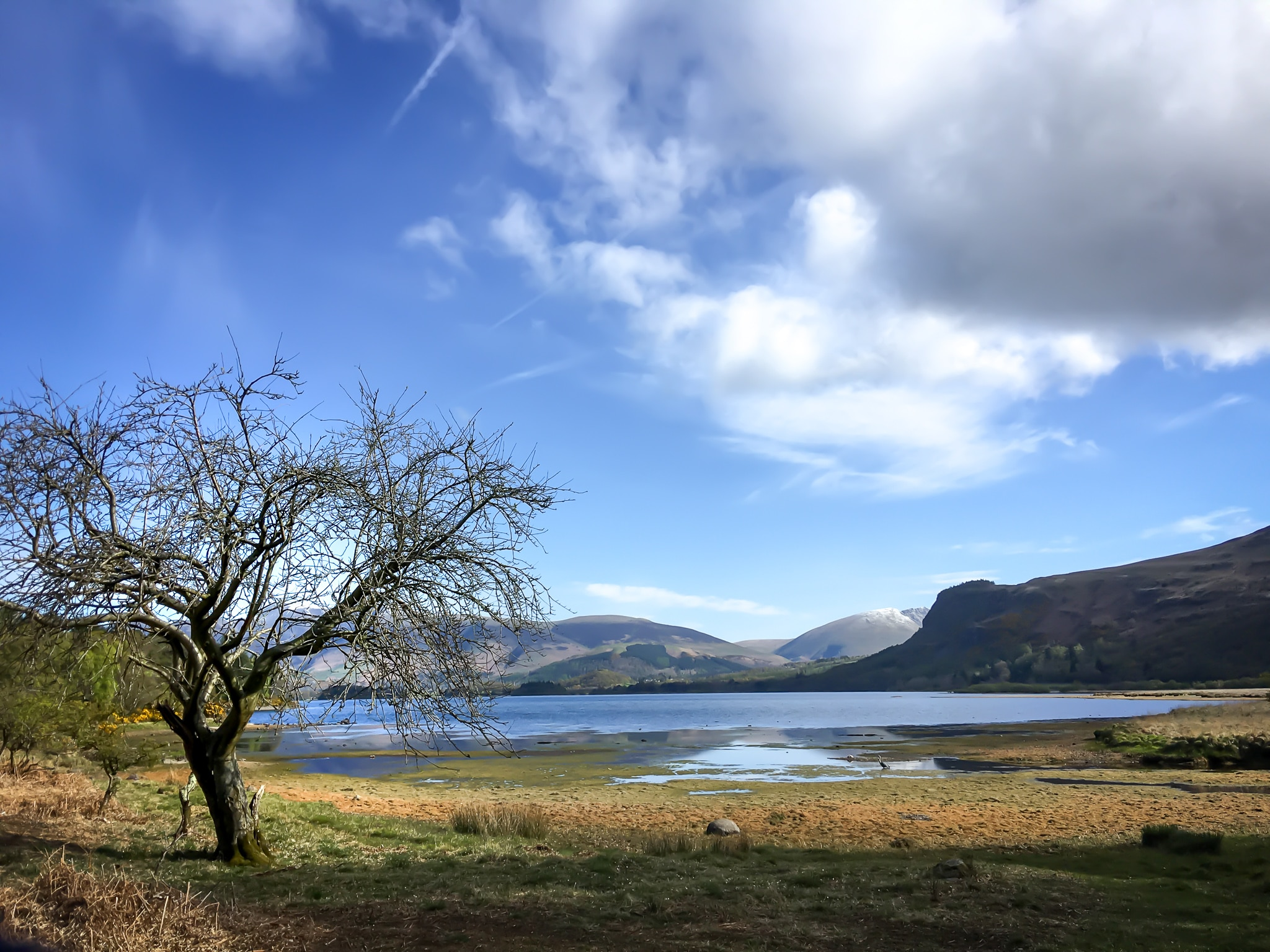 Tree by Derwentwater ©HelenBushe
