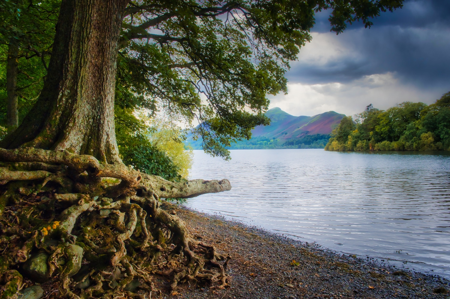 Tree Roots by the Lake ©HelenBushe