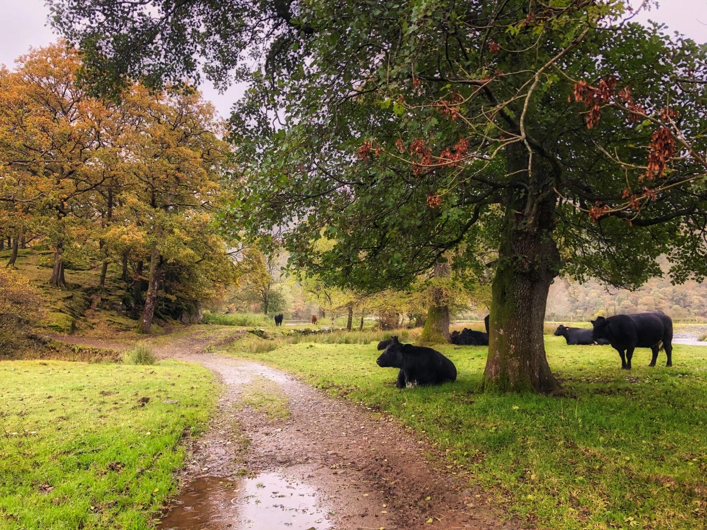 A Walk in the Rain ©HelenBushe